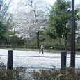 桜の花の上でスケート